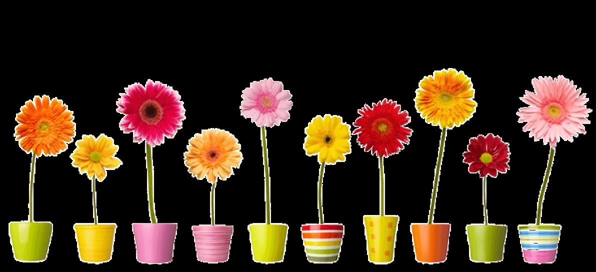 Group of Romantic Flowers in vases