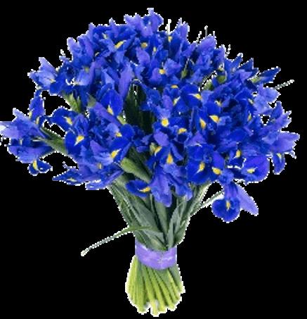 Lilac Romantic Flower